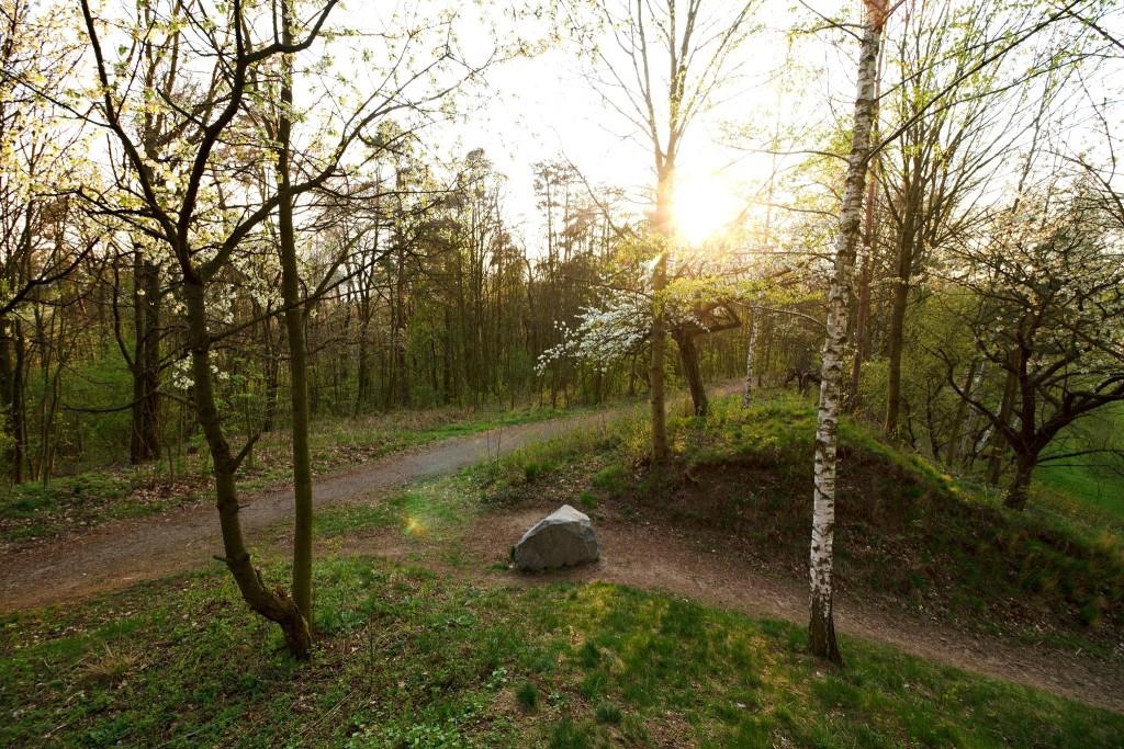 Les pod Kunětickou horou