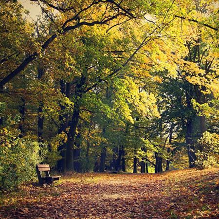 Podzimní park, Hrádek u Nechanic