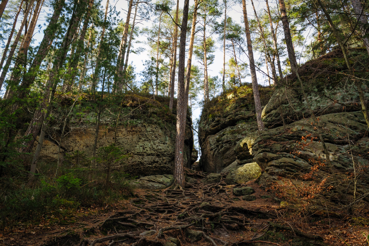 Kousek za rozcestím Za Borky vede trasa mezi úzkými skalami