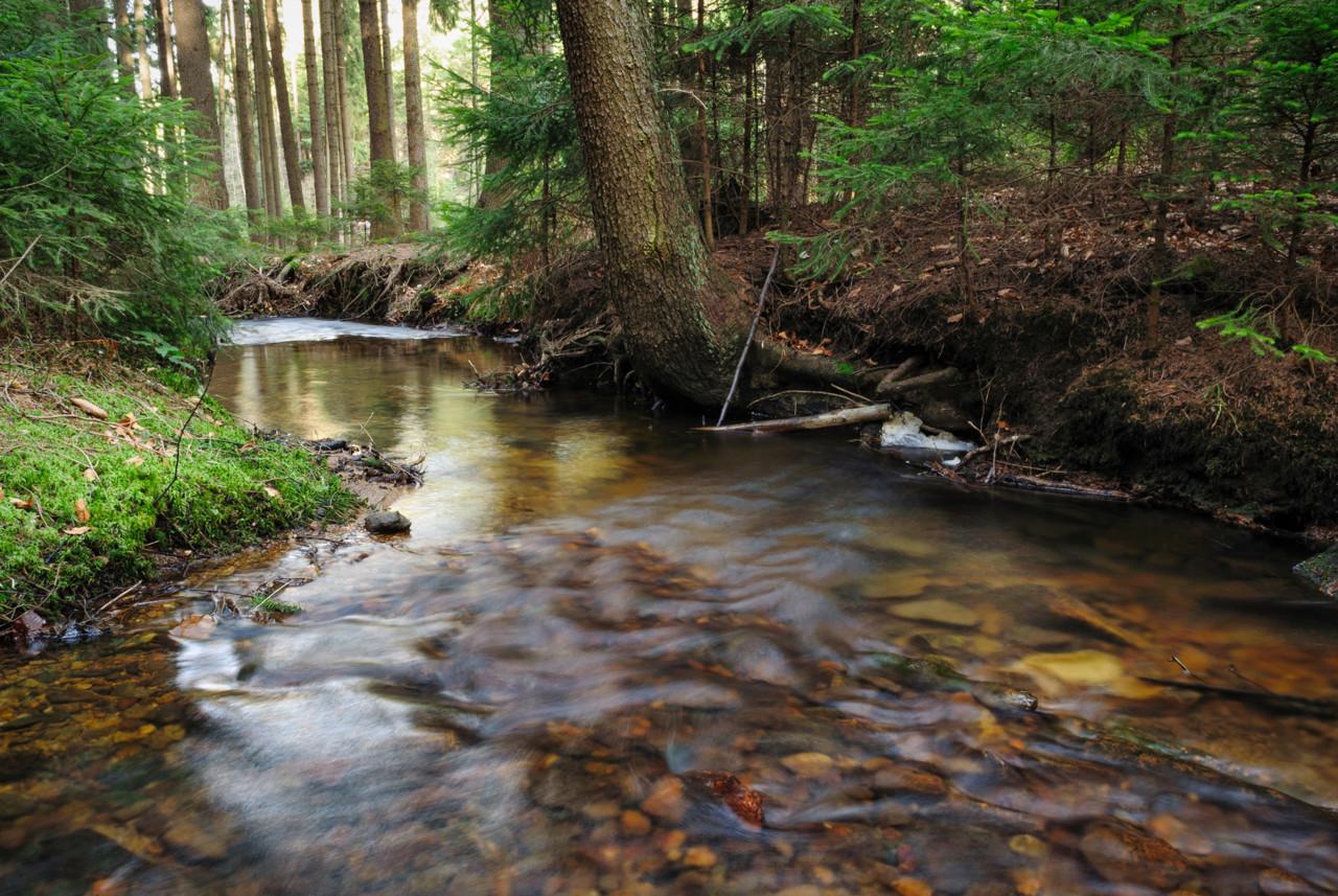 Řeka Novohradka protékající přírodní rezervací