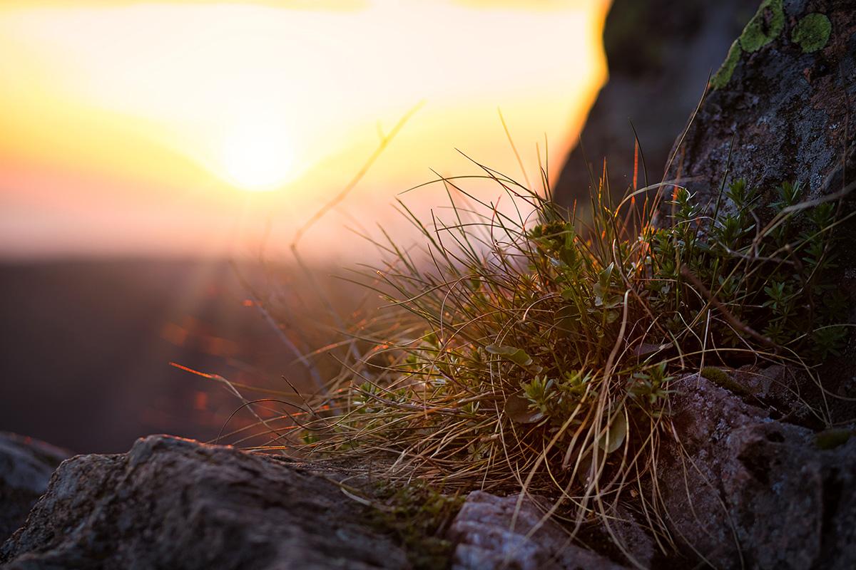 Tráva na Ohebu, detail, Seč, západ slunce